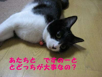 IMG_4120.jpg