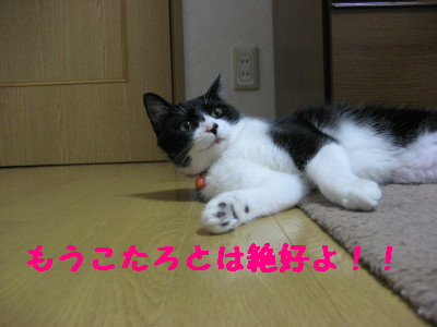 IMG_4129.jpg