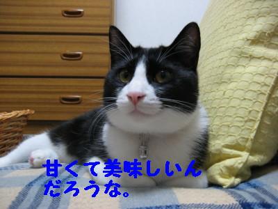 IMG_4159.jpg