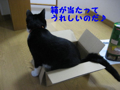 IMG_4243.jpg