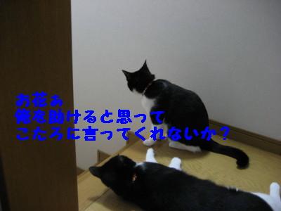 IMG_4317.jpg
