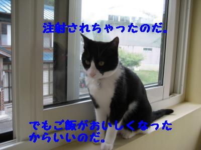 IMG_4354.jpg