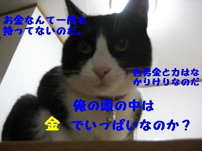 IMG_4387.jpg