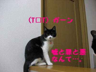 IMG_4397.jpg