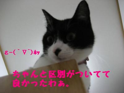 IMG_4407.jpg