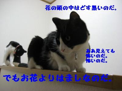 IMG_4412.jpg