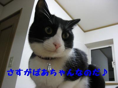 IMG_4423.jpg