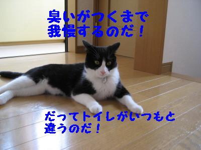 IMG_4532.jpg