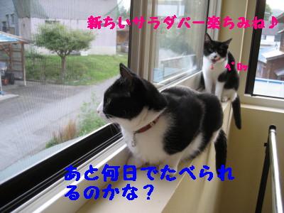 IMG_4567.jpg