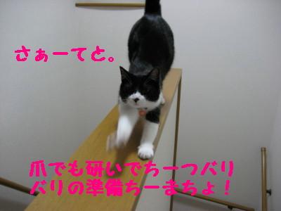 IMG_4834.jpg