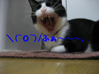 IMG_4870.jpg