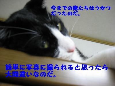 IMG_4892.jpg