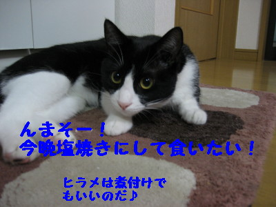 IMG_4929.jpg