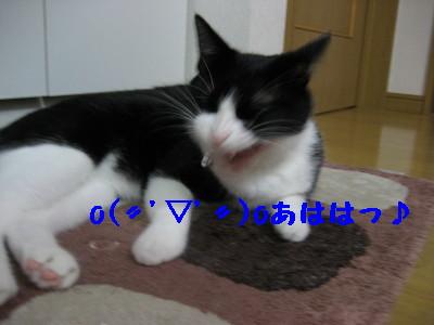 IMG_4933.jpg