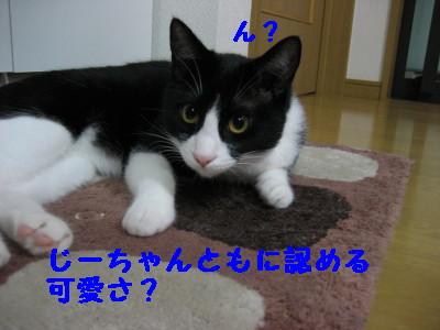 IMG_4934.jpg