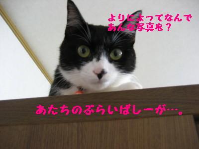 IMG_5039_1.jpg