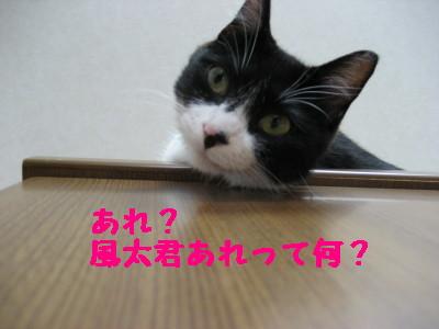 IMG_5084.jpg