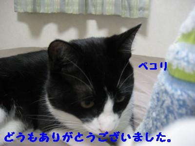 IMG_5223.jpg