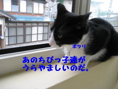 IMG_5287.jpg