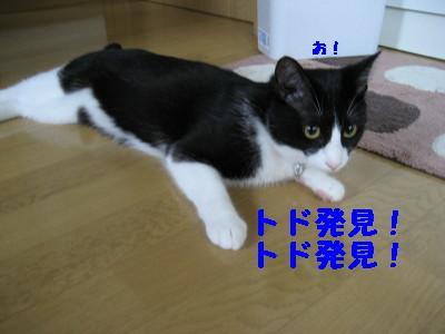 IMG_5446.jpg