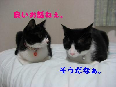 IMG_5473.jpg