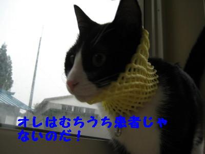 IMG_5620.jpg