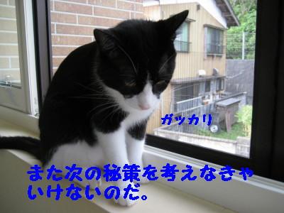 IMG_5753.jpg