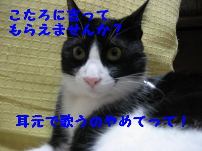 IMG_6019.jpg