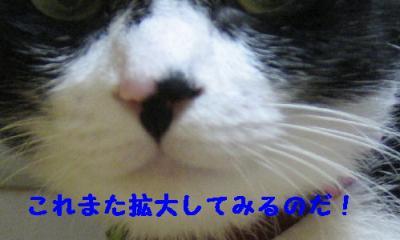 IMG_6055_1.jpg