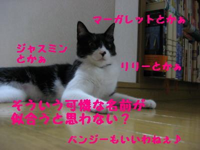 IMG_6074.jpg