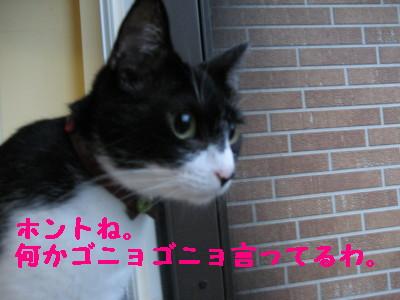 IMG_6183.jpg