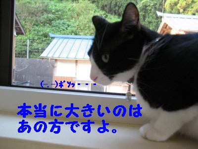 IMG_6246.jpg