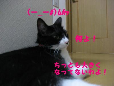 IMG_6290.jpg