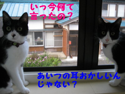 IMG_6488.jpg