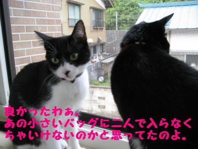 IMG_6492.jpg