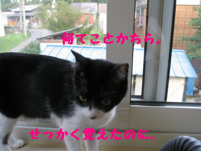IMG_6518.jpg
