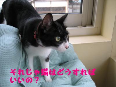 IMG_6526.jpg