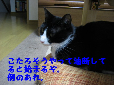 IMG_6801.jpg