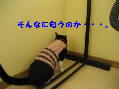 IMG_6834.jpg