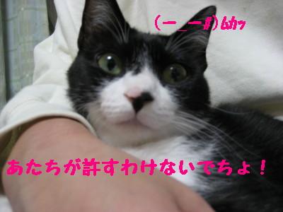 IMG_6929.jpg