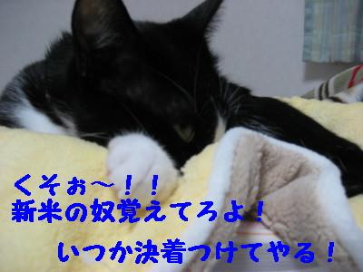 IMG_7076.jpg