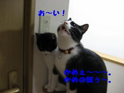IMG_7297.jpg