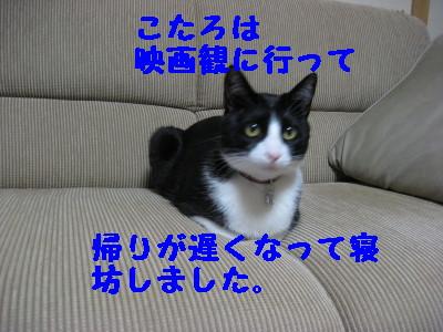 IMG_7889.jpg