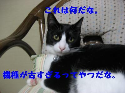 IMG_7933.jpg