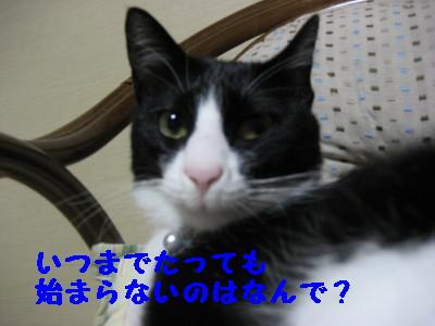 IMG_7938.jpg