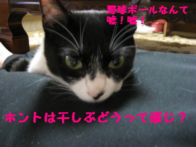 IMG_7988.jpg