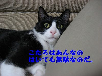 IMG_8039.jpg