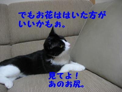 IMG_8073.jpg
