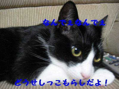 IMG_8304.jpg