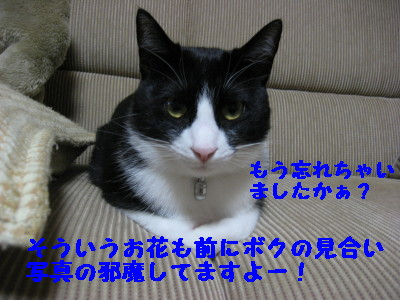 IMG_8349.jpg